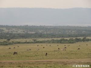 (サファリ)マサイマラ国立公園 - コピー