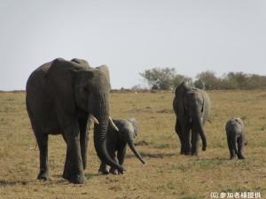 (サファリ)ゾウの家族 - コピー