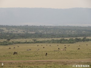 9.マサイマラ国立公園